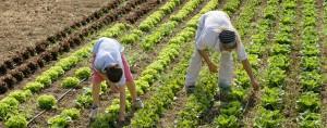 06_Verduras ecológicas Picassent