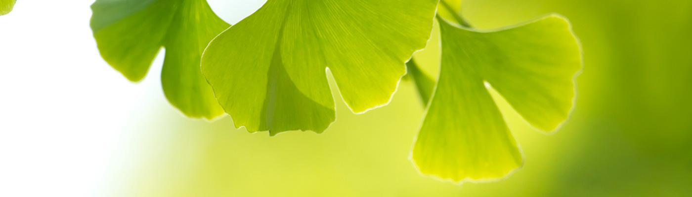 Premios Verdes Fundación