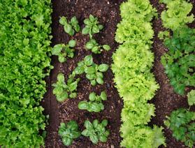 Alimentación Inteligente - Premios Verdes